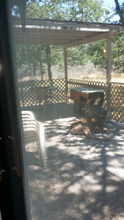 Deer on the Deck